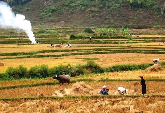 Đất và con người - Thái Công Tụng - Hưng Việt - VIET Héritage Renaissance